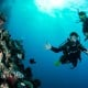 2 Day Referral Dive Course Stateroom