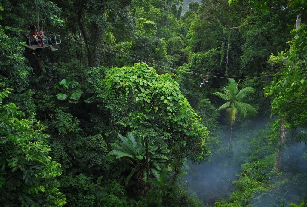 Explore the oldest rainforest in the world from a different angle