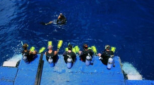 Scuba dive Courses