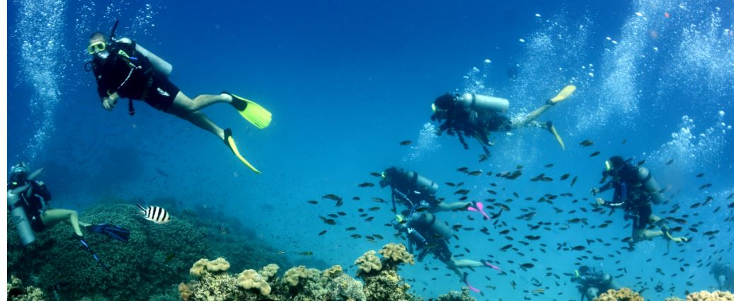 Scuba diving - Best place to dive the great barrier reef ...