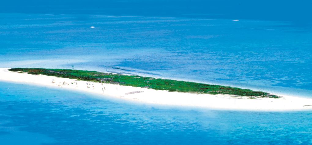 Michaelmas Cay - reef trip