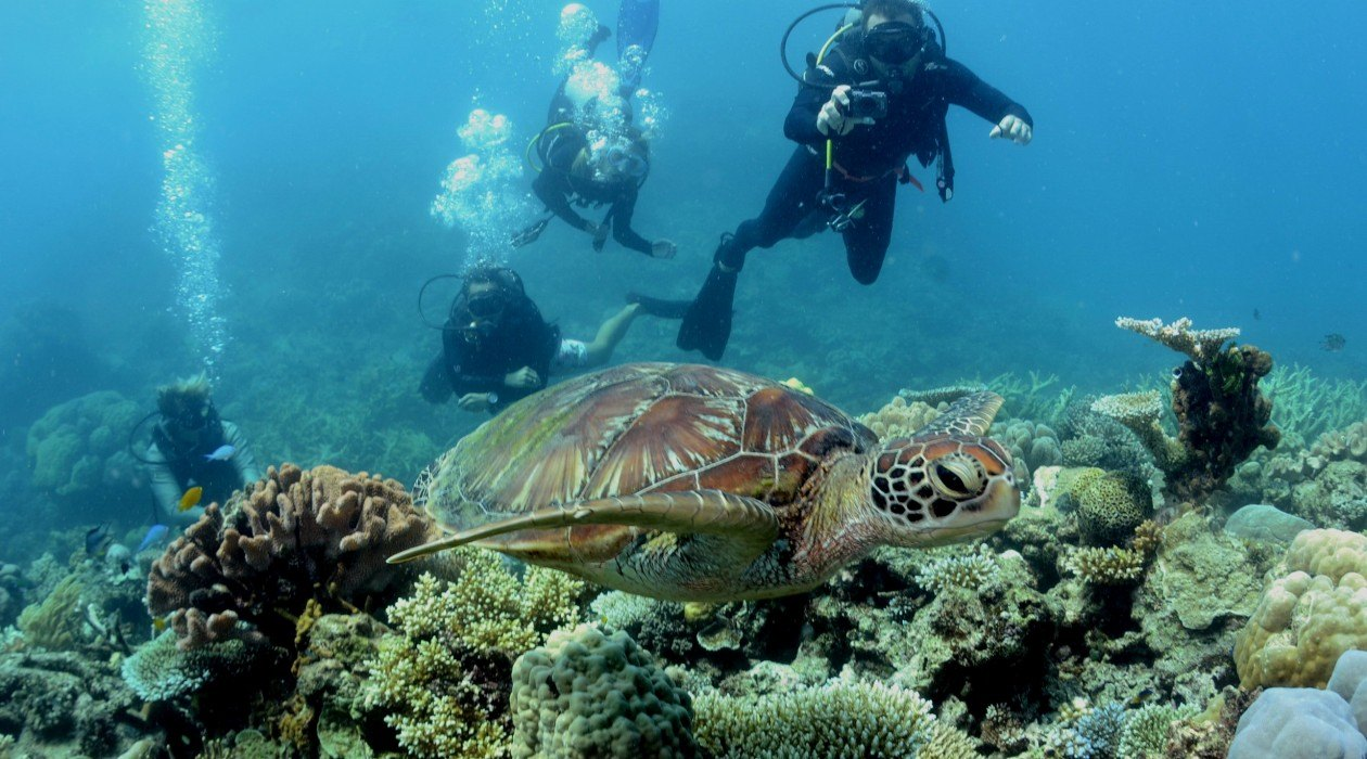 reefs day debacle - photo #39