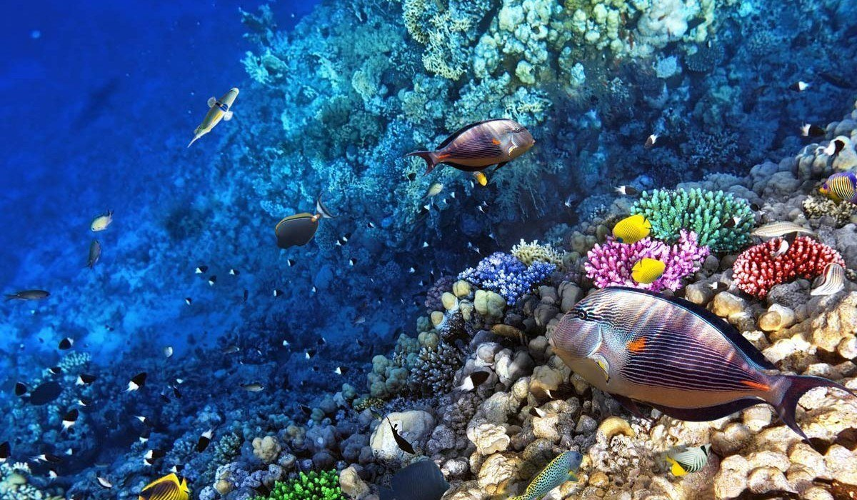 Great barrier reef budget cruise for Ocean bed meaning