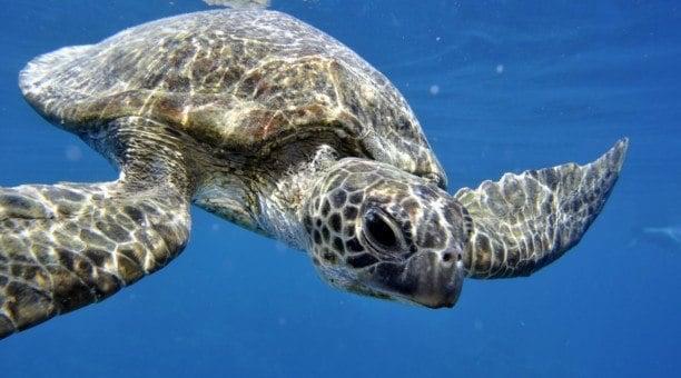 Reef Cruise Resort Divers