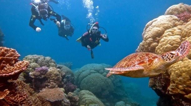 Great Barrier Reef Scuba diving, Cairns Australia