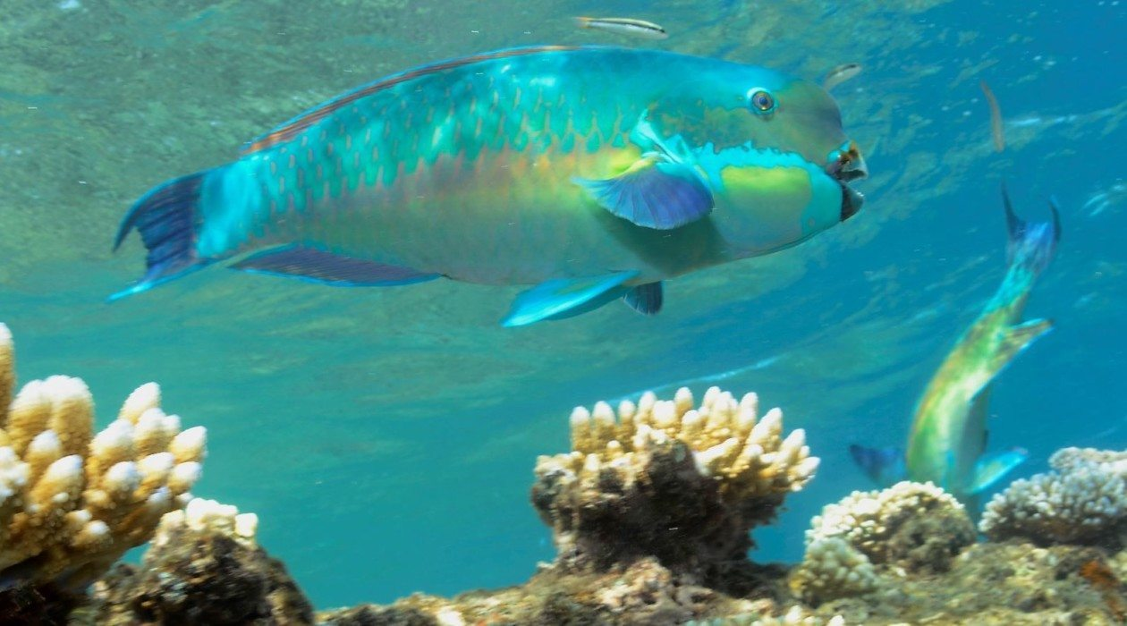 Reef cruise resort divers reef trip for Great barrier reef fish
