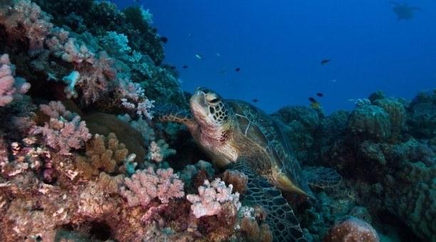 3 Day Resort Scuba Diving and Kuranda