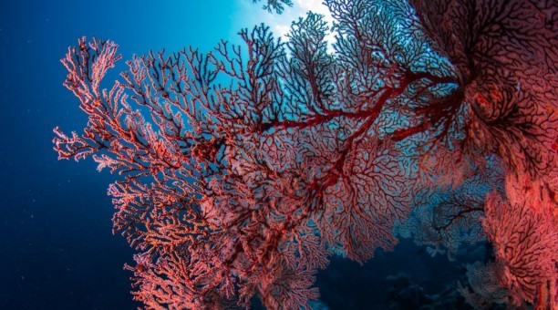 4 day Reef and Rainforest Resort Dive Adventure