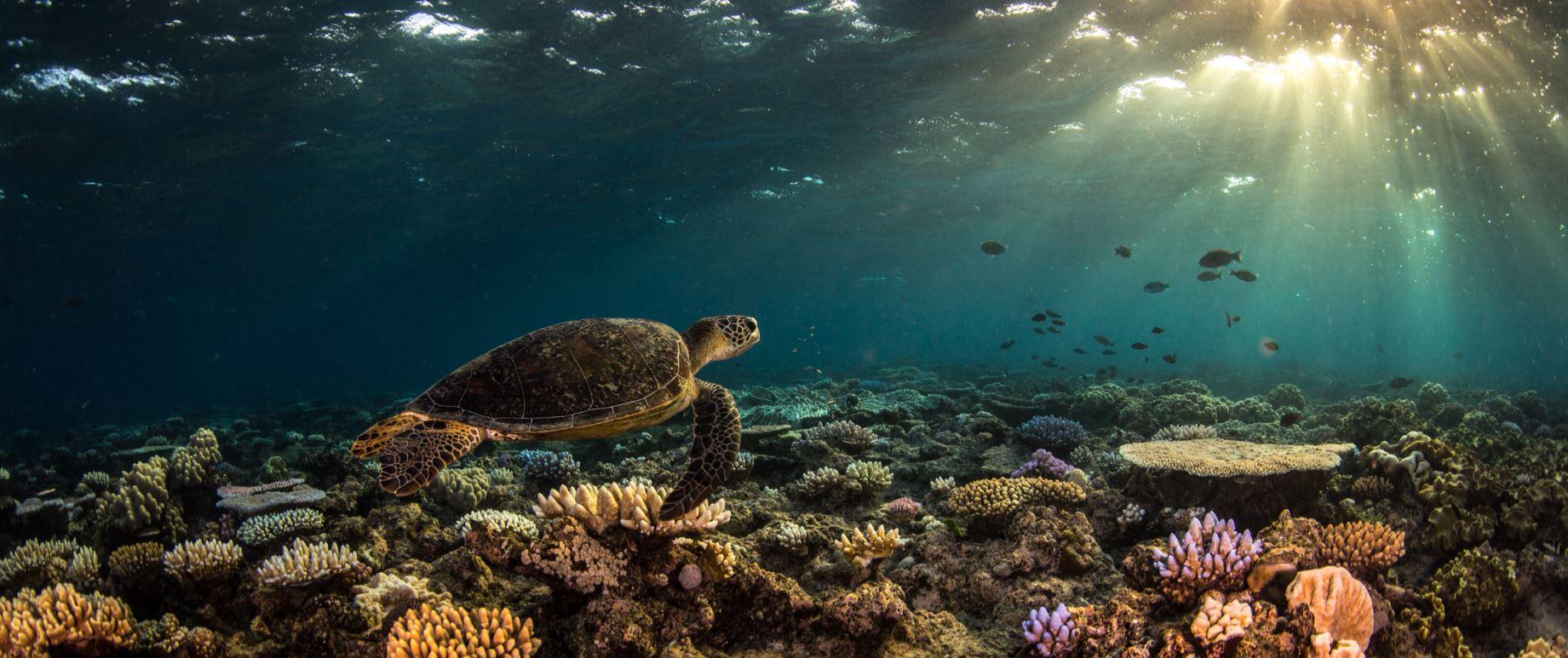 reefs day debacle - photo #13