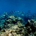 Reef Liveaboard & Rainforest
