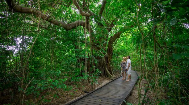 Green Island Rainforest Boardwalk