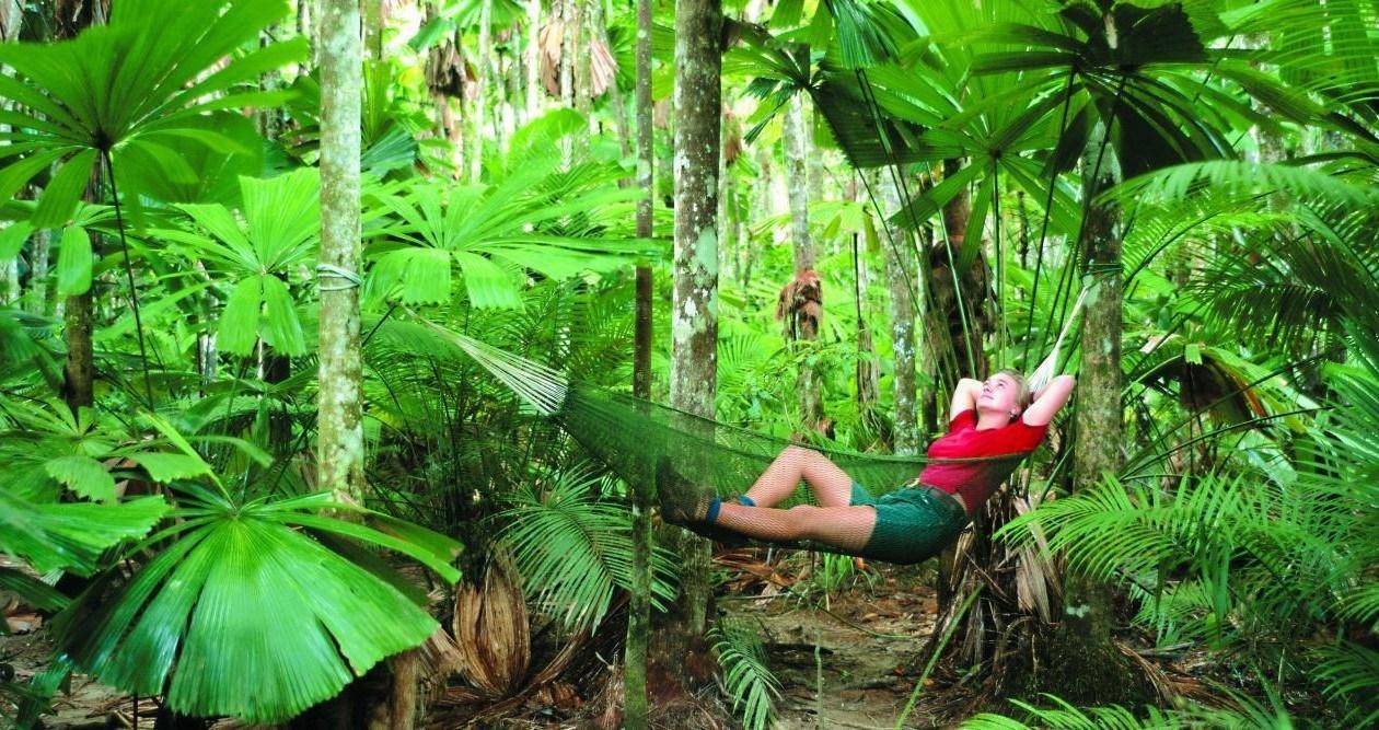 Top deck liveaboard rainforest reef encounter for Australian rainforest