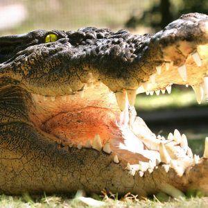 Hartleys Crocodile Adventures