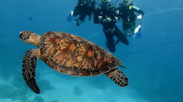 Great Barrier Reef resort Dive