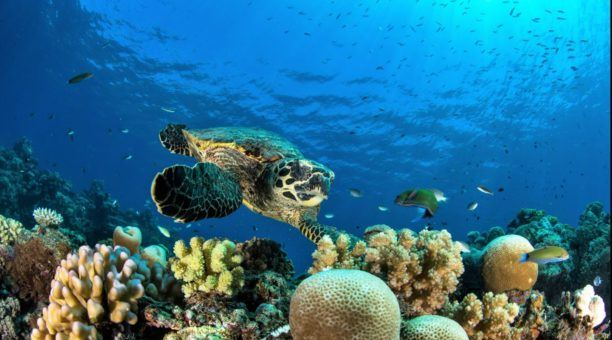 you will see more of Australia's Great Barrier Reef scuba diving
