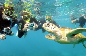 Snorkeling with the locals