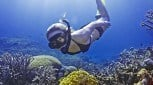 4 day Reef and Rainforest Snorkel Adventure
