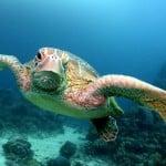 Great Barrier Reef, Reef Experience