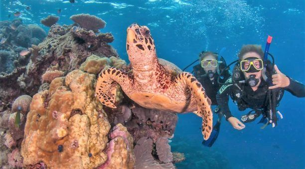 Scuba Dive Tour on the Great Barrier Reef