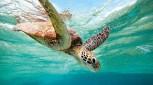 2 Day Top Deck Club Snorkel
