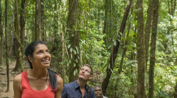 Guided Rainforest Walks