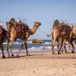 Half Day tours Australia has so many great half day tour options take a scenic flight, enjoy high tea, take a scenic train ride or a half day harbour cruise one thing is for sure you will enjoy every minute of your time in Australia.