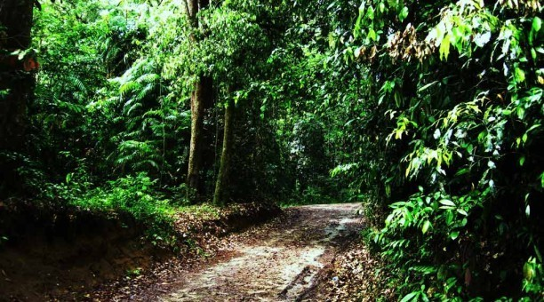 Bloomfield Track Daintree Rainforest