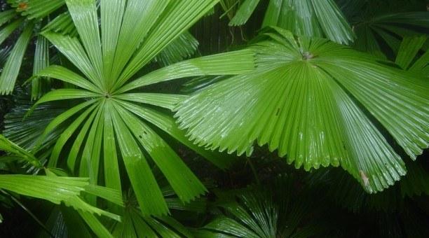 tropical rainforest Cairns, North Queensland Australia