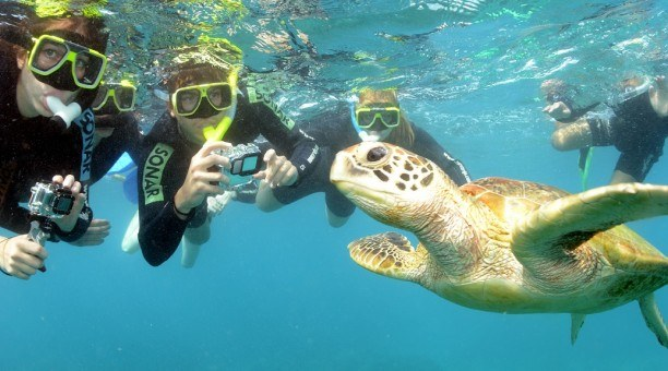 Great Barrier Reef snorkel