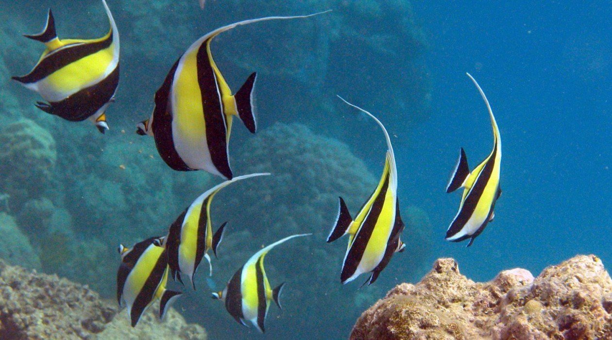 Multishare liveaboard hot getaways for Great barrier reef fish