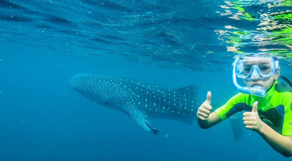 Ningaloo reef whale shark quest hot getaways - Ningaloo reef dive ...