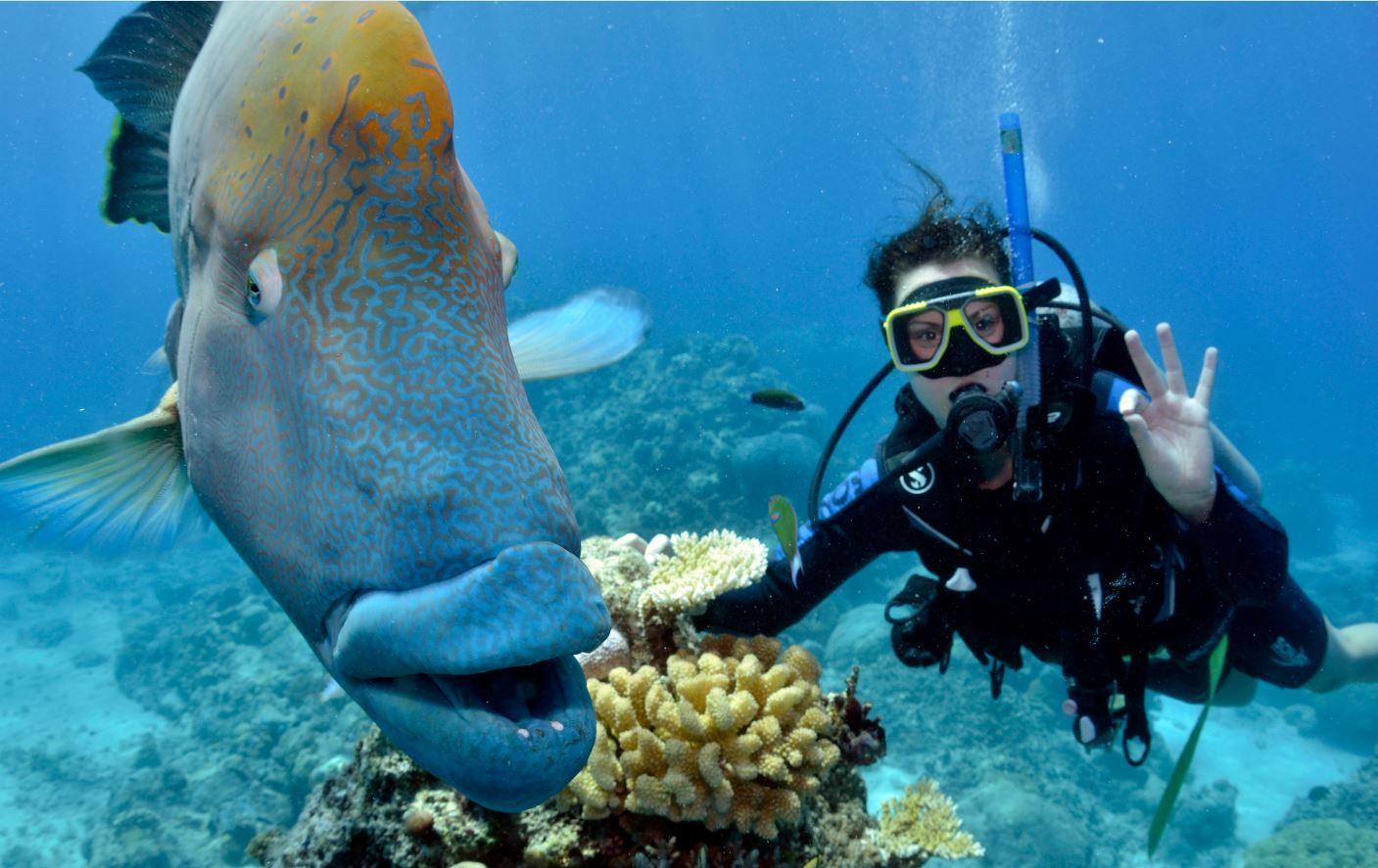 Great-barrier-reef-scuba-dive
