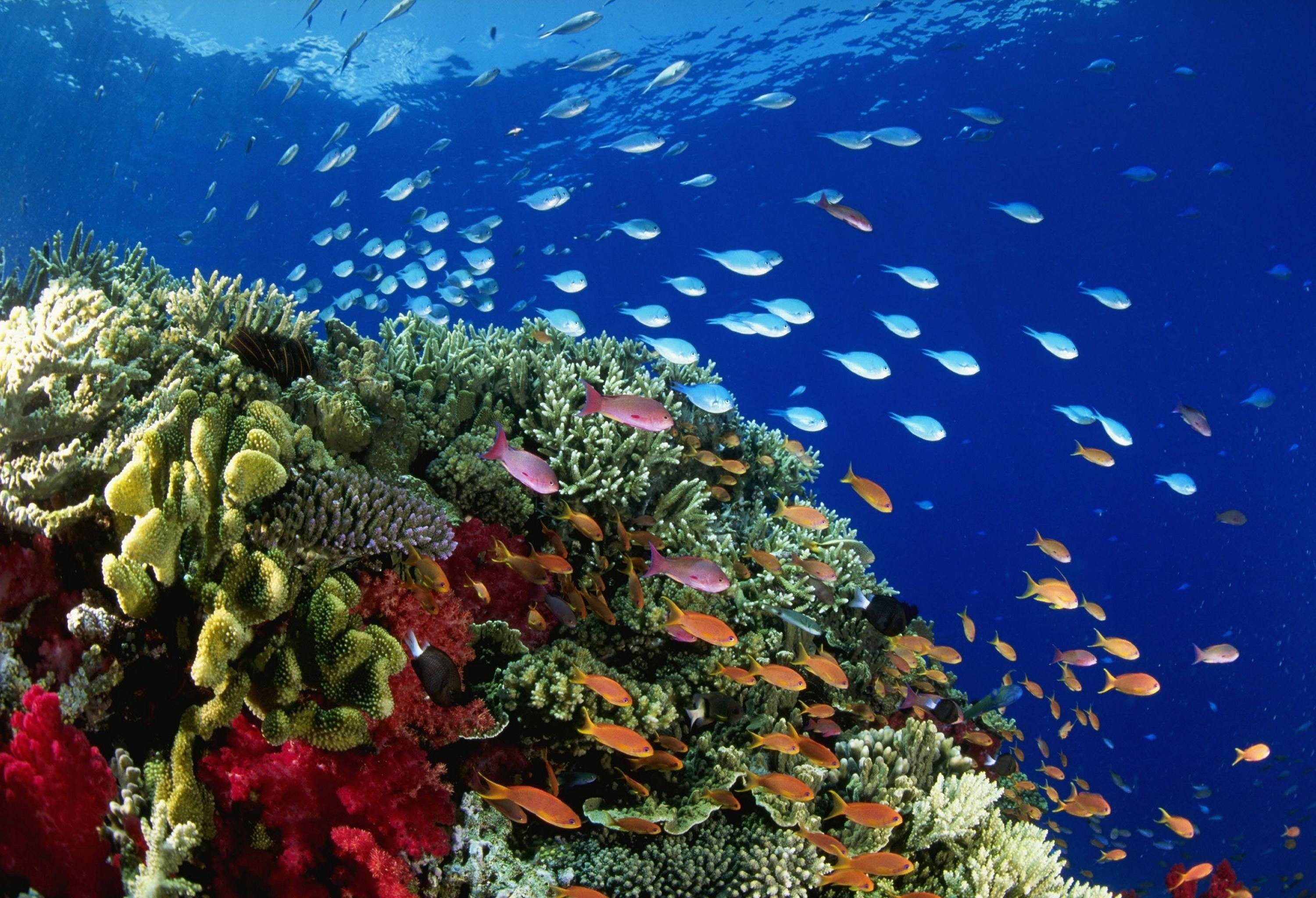 the great barrier reef essays The iconic great barrier reef stretches for 2300km along the queensland coast, and as far as 400km from the coast to the outer reefs, covering an area of.
