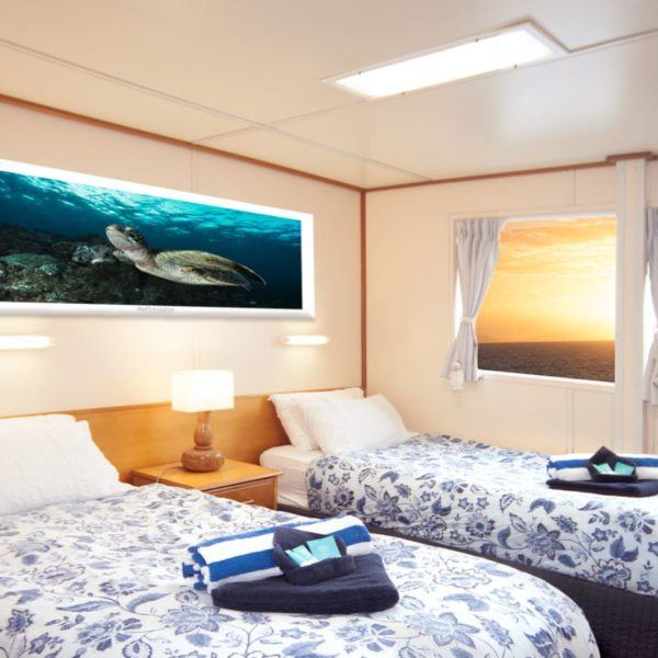Twin Bed Stateroom Cabin, Reef Encounter