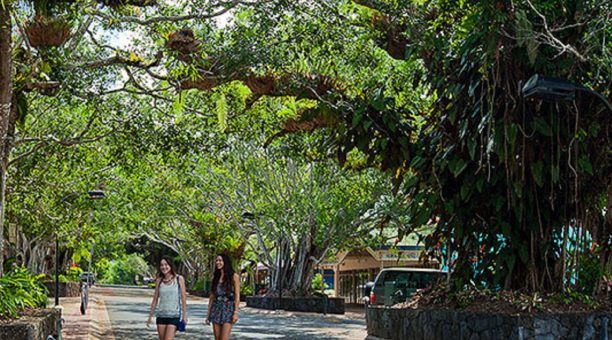 Beautiful tree-lined Kuranda township