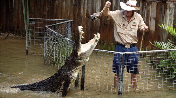 Crocodile FeedingTime