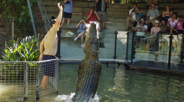 Crocodiles Can Jump