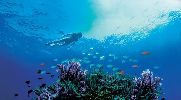 Snorkel over phenomenal Outer Barrier Reef locations