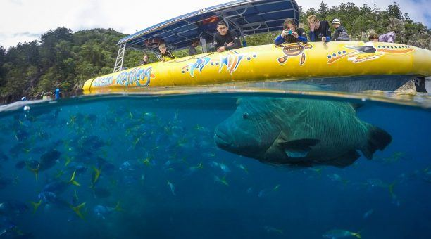Take a look at the amazing underwater world teaming with incredble sea creatures.