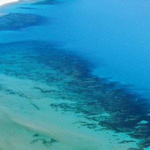 Great Barrier Reef Tour and Luxury Daintree Rainforest