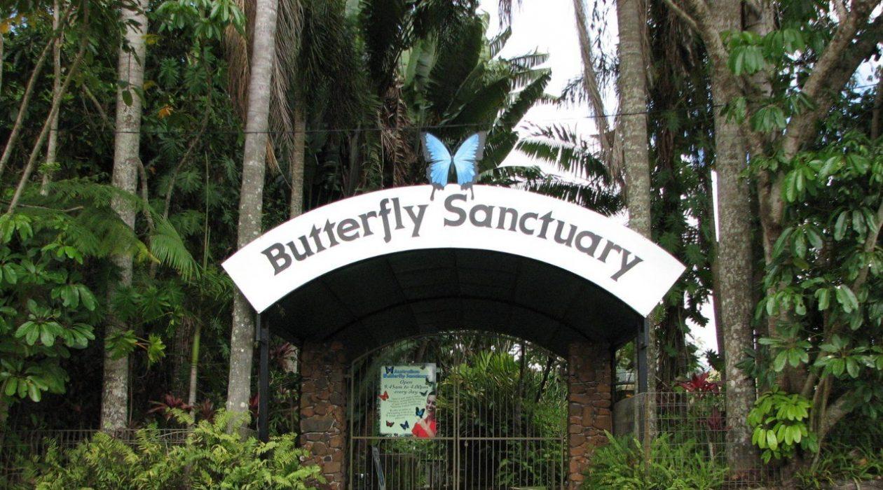 Australian Butterfly Sanctuary - HotGetaways.com.au
