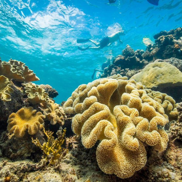 Reef and Tropical Adventure