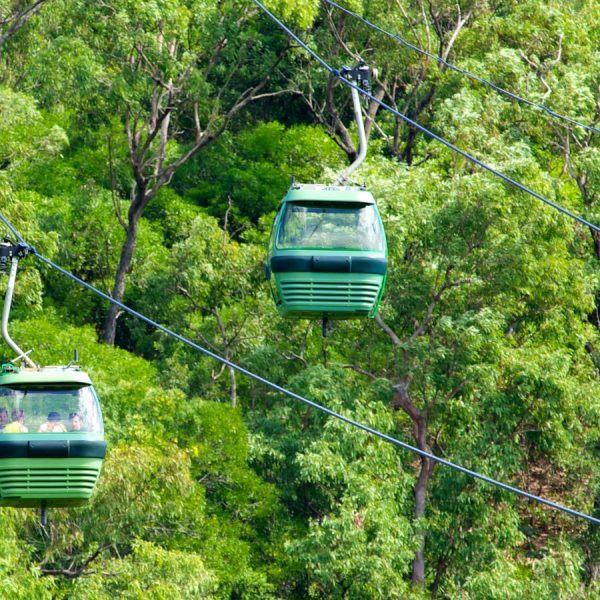 Glide above the rainforest