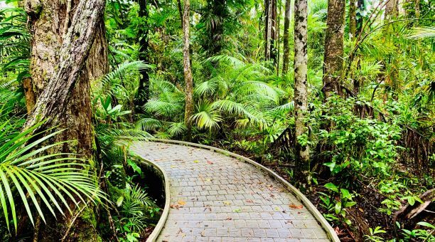 Madja Boardwalk - Daintree Rainforest