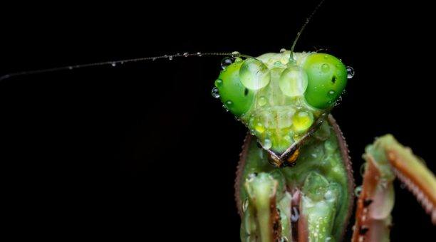 Get the chance to take some amazing macro shots like this Praying Mantis