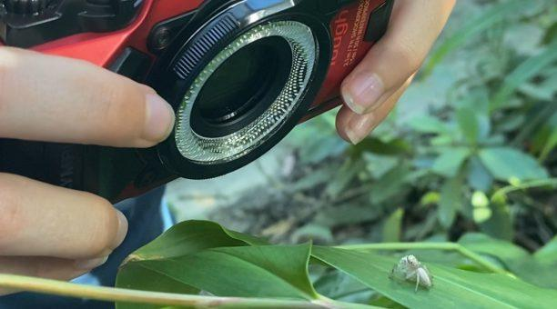 Get up close and personal to the most interesting insects and fungi you will find!